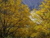 颜色在秋天 免版税库存图片