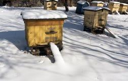 颜色在雪的蜂蜂房 库存图片