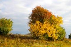 颜色地域在10月 免版税库存图片