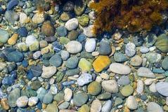 颜色小卵石海运 库存图片