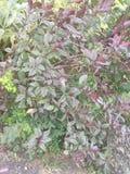 颜色树 图库摄影