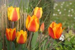 颜色桔子-正面图花  免版税库存照片