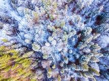颜色森林和第一雪 鸟瞰图 图库摄影