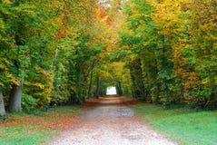 颜色森林 免版税库存照片