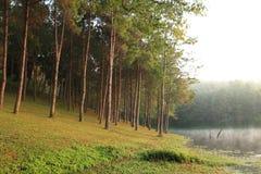 颜色森林 库存照片