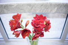 颜色活珊瑚立场花在一个花瓶的由窗口 免版税库存图片