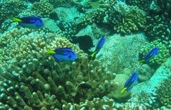 颜色热带鱼 库存图片