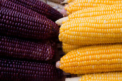 颜色玉米二 图库摄影