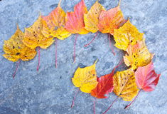 颜色留下槭树 免版税库存图片
