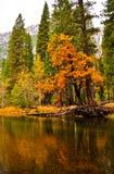 颜色秋天优胜美地 免版税图库摄影