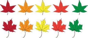 颜色秋天叶子的传染媒介例证 库存图片
