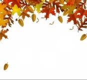 颜色秋天叶子 图库摄影