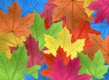 颜色秋天叶子 免版税库存图片