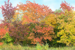 颜色秋天树和天空 免版税库存图片