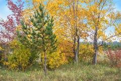 颜色秋天树和天空 免版税库存照片