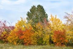 颜色秋天树 库存照片