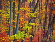 颜色秋天森林 免版税库存照片