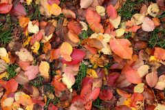 颜色秋天比赛  库存照片