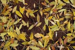 颜色秋天比赛  免版税库存照片
