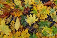 颜色秋天比赛  免版税库存图片
