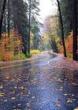颜色秋天路绕 库存图片