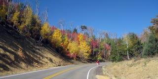 颜色秋天远足者路结构树 免版税库存照片