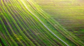 颜色秋季领域细节摄影  免版税图库摄影