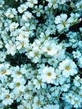 颜色美丽的开花的花细节摄影  库存图片