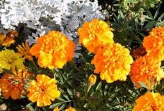 颜色花在庭院里 免版税库存图片
