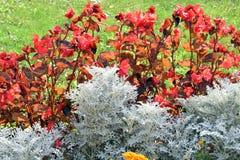 颜色花在庭院里 库存照片