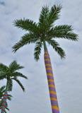 颜色装饰棕榈树 库存照片