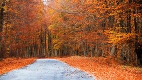 颜色路径  免版税图库摄影