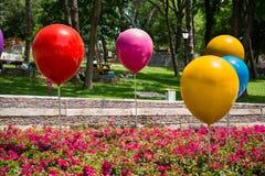 颜色baloons和花在公园 库存照片