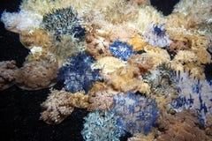 颠倒的水母 免版税库存照片