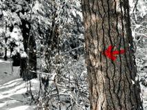 颤动小舌池塘国家公园供徒步旅行的小道显示箭头 库存照片