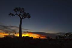 颤抖日落结构树 库存照片