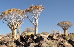 颤抖树和岩石风景 库存图片