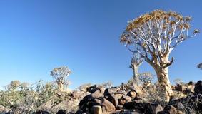 颤抖树和岩石风景 免版税库存图片
