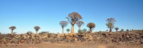 颤抖树和岩石风景 图库摄影