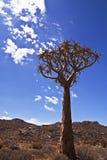 颤抖结构树 免版税库存照片