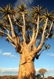 颤抖结构树 库存图片