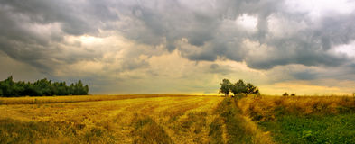 暴风云的全景图象在草甸的 免版税图库摄影