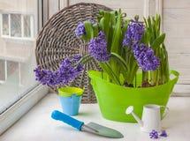 风信花、铁锹和喷壶在窗口 免版税库存图片