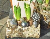 风信花的构成在一本木日志的 库存照片
