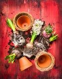 风信花装壶,组成在红色木garten桌 免版税图库摄影