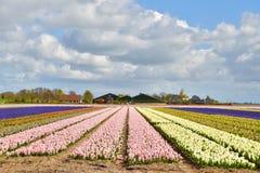 风信花领域和农厂房子 免版税库存图片
