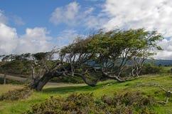 风倾向结构树在Fireland (火地群岛),巴塔哥尼亚,银 库存图片
