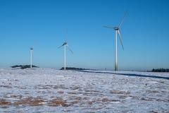 风力植物在冬天 库存图片