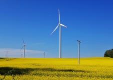 风力植物 库存照片