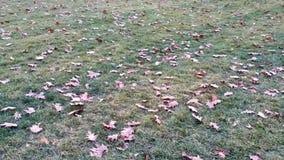 风吹的叶子 免版税库存照片